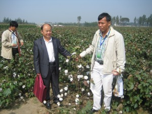 Chinese Bt cotton